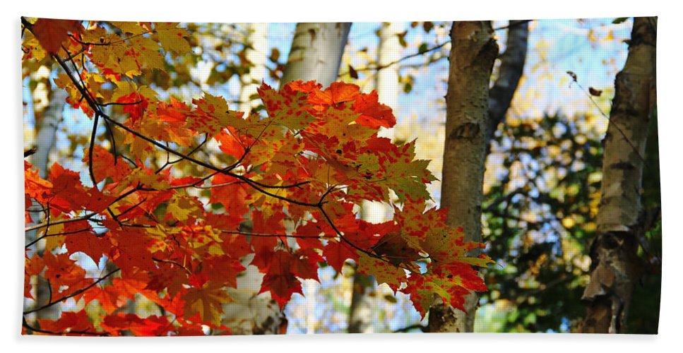 Maple Leaves And Birch Bark Hand Towel featuring the photograph Maple Leaves And Birch Bark by Debbie Oppermann