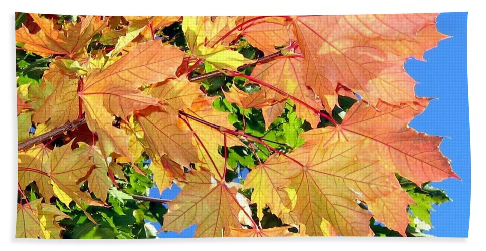Autumn Bath Sheet featuring the photograph Maple Mania 1 by Will Borden