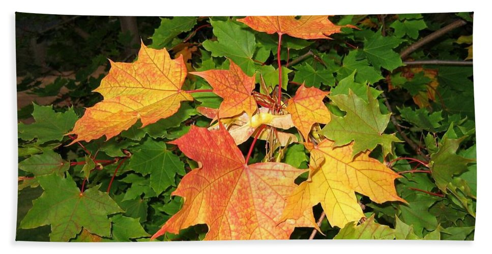 Maple Leaves Hand Towel featuring the photograph Maple Mania 10 by Will Borden