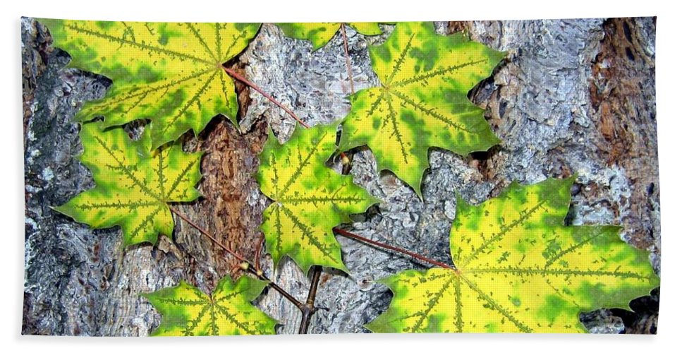 Autumn Hand Towel featuring the photograph Maple Mania 12 by Will Borden