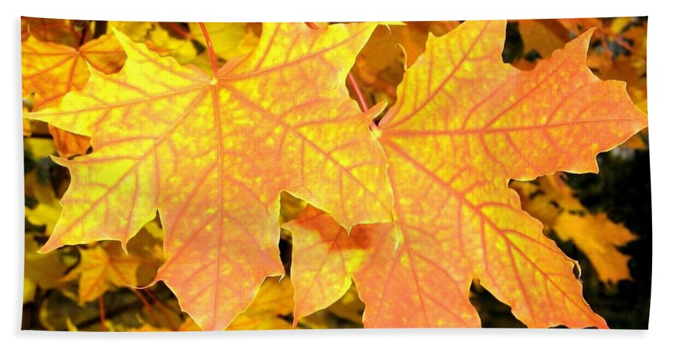 Autumn Bath Towel featuring the photograph Maple Mania 2 by Will Borden