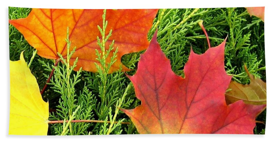 Autumn Hand Towel featuring the photograph Maple Mania 5 by Will Borden