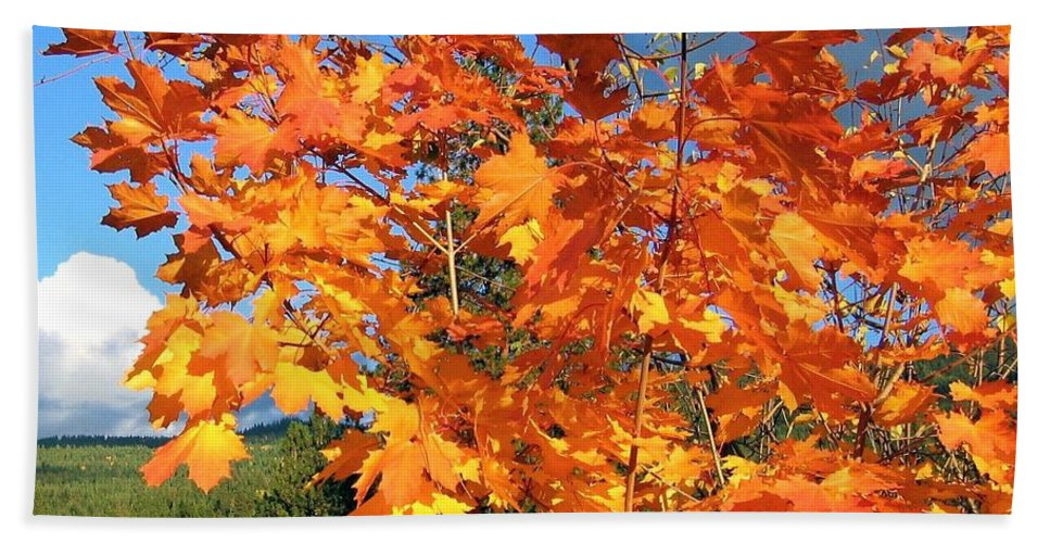 Autumn Bath Towel featuring the photograph Maple Mania 8 by Will Borden