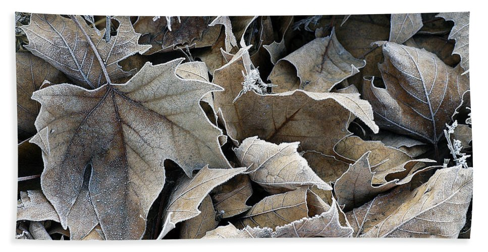 Maple Hand Towel featuring the photograph Maple Salad by D'Arcy Evans