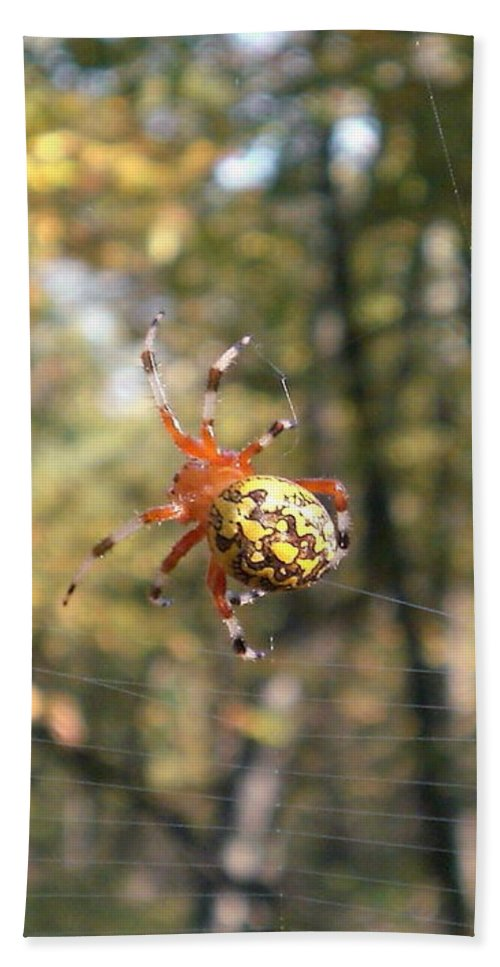 Virginia Marbled Orb Weaver Images Marbled Orb Weaver Photo Prints Red Black And Yellow Spider Images Orb Weaver Pictures Spider Diversity Food Web Forest Ecosystem Nature Biodiversity Arachnid Images Hand Towel featuring the photograph Marbled Orb Weaver by Joshua Bales