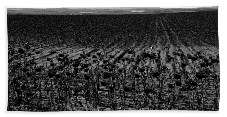 Sunflowers Bath Sheet featuring the photograph March Of The Sunflowers by David Lee Thompson