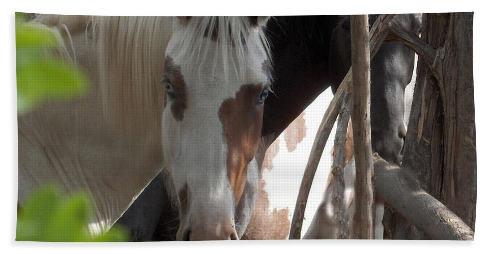 Horses Herd Mares Trees Ranch Farm Acreage Bath Sheet featuring the photograph Mares In Trees by Andrea Lawrence