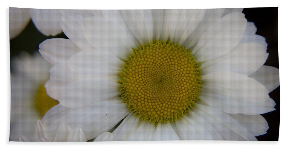 Marguerite Bath Sheet featuring the photograph Marguerite Daisies by Teresa Mucha