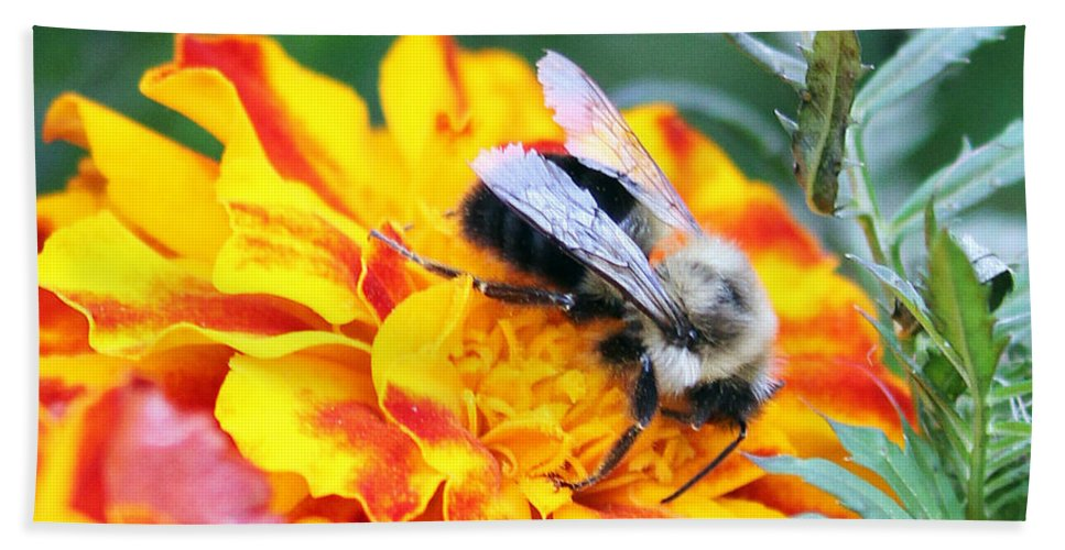 Bumble Bee Bath Sheet featuring the photograph Marigold And The Bee by Jennifer Robin