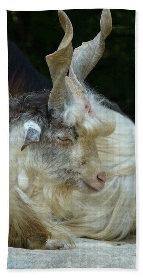 Goat Bath Sheet featuring the photograph Markhor by Valerie Ornstein