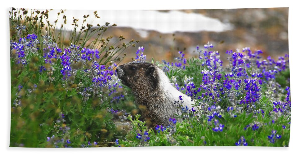 Marmot Hand Towel featuring the photograph Marmot In The Wildflowers by David Lee Thompson