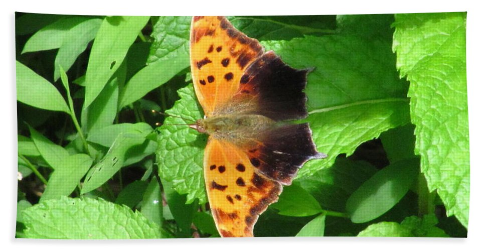 Maryland Eastern Comma Images Maryland Common Anglewing Butterfly Images Prints Maryland Butterfly Images Eastern Comma Prints Common Anglewing Photograph Forest Life Biodiversity Forest Ecology Entomology Nature Unique Species Black And Orange Butterfly Leaf Winged Butterfly Images Butterfly On Spearmint Leaves Hand Towel featuring the photograph Maryland Eastern Comma by Joshua Bales
