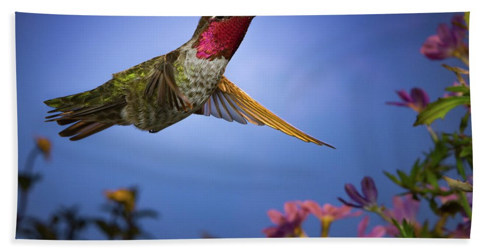 Hummingbird Hand Towel featuring the photograph May I Help You Sir? by William Freebillyphotography