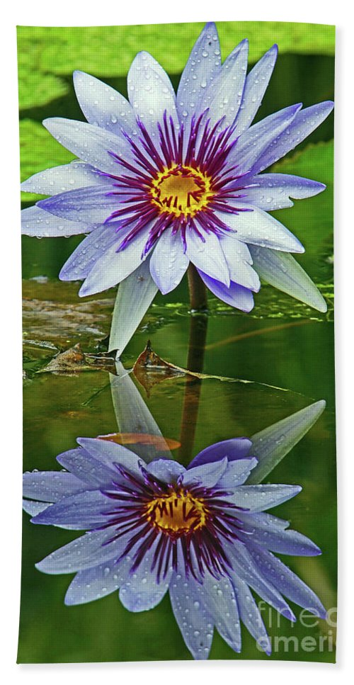 Lily Bath Sheet featuring the photograph Mckee Waterlily II by Larry Nieland