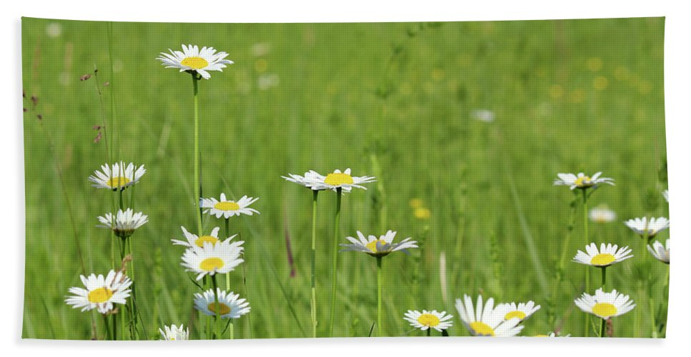 Camomile Hand Towel featuring the photograph Meadow With White Wild Flowers Spring Scene by Goce Risteski