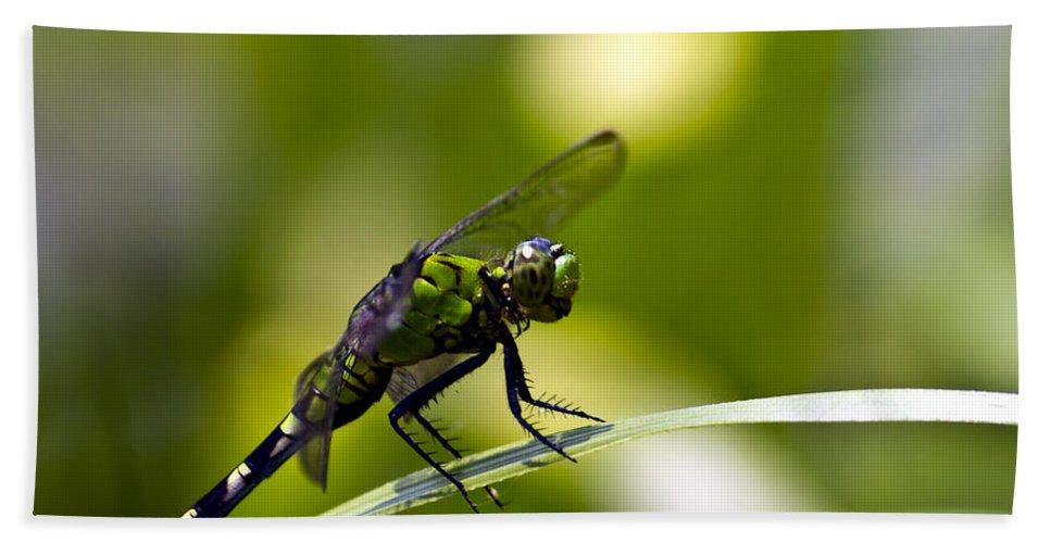 Dragonfly Bath Sheet featuring the photograph Mean Green by Ken Frischkorn