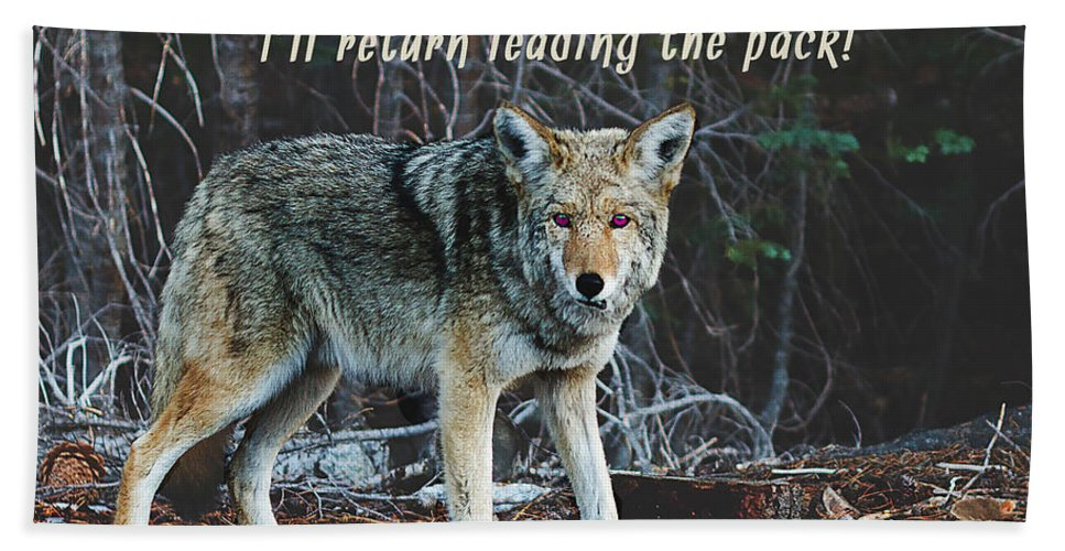 Inspirational Hand Towel featuring the photograph Menacing Wolf In The Woods Lead The Pack by Elaine Plesser