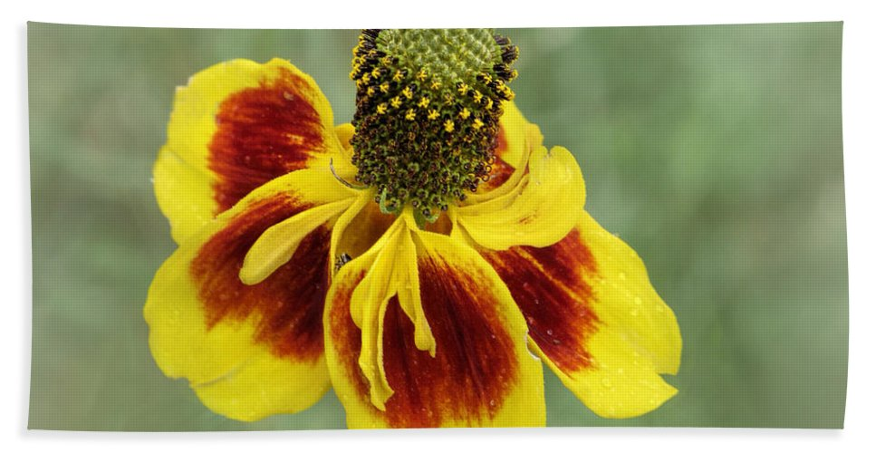 Bloom Bath Sheet featuring the photograph Mexican Hat by David and Carol Kelly