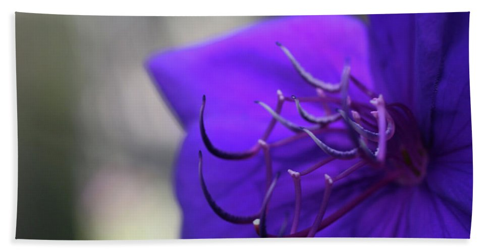 Close-up Photo Photography Flower Plant Purple Mexican Petunia Hand Towel featuring the photograph Mexican Petunia by Christina Geiger