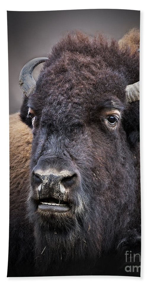 Bison Bath Sheet featuring the photograph Mighty Bison by Emma England