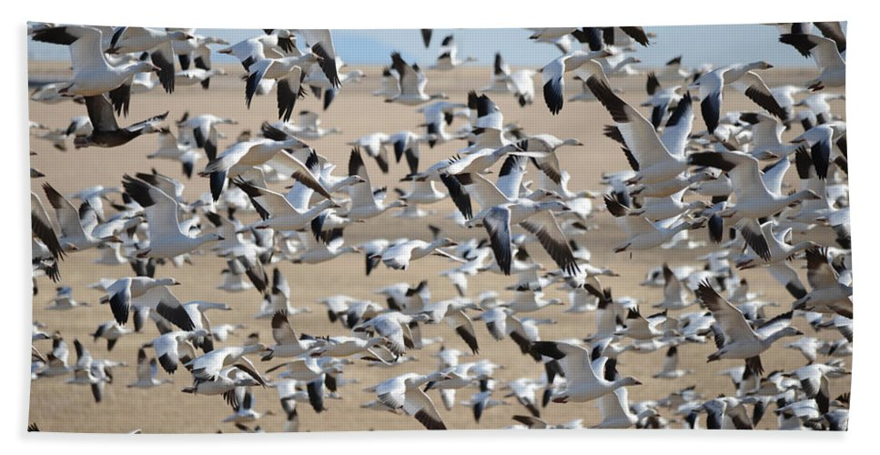 Migration Hand Towel featuring the photograph Migrating Snow Geese by Whispering Peaks Photography