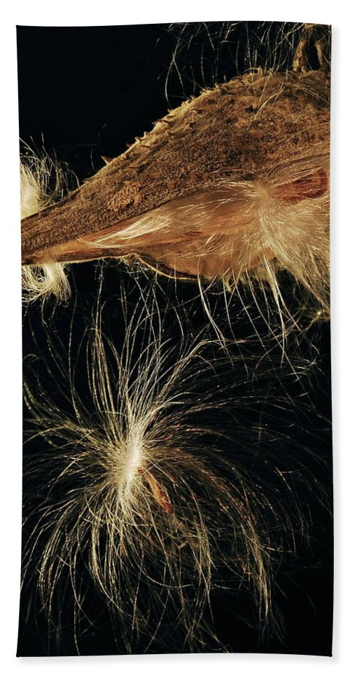 Mgp Photography Hand Towel featuring the photograph Milkweed Pod by Michael Peychich