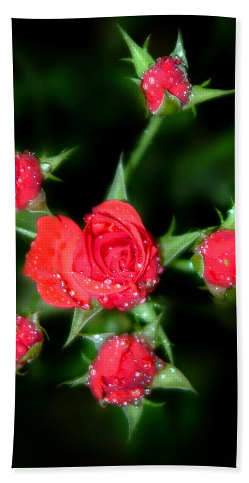 Roses Hand Towel featuring the photograph Mini Roses by Anthony Jones