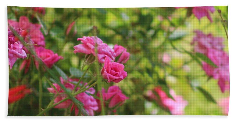 Miniature Rose Bath Sheet featuring the photograph Miniature Fuchsia Roses by Colleen Cornelius