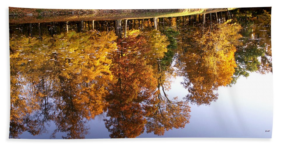 jenny Gandert Lake Gold Mining Water Reflection Sky Blue Yellow Maple Maples Trees Autumn Fall Grass Real Bath Sheet featuring the photograph Mining For Gold by Jenny Gandert