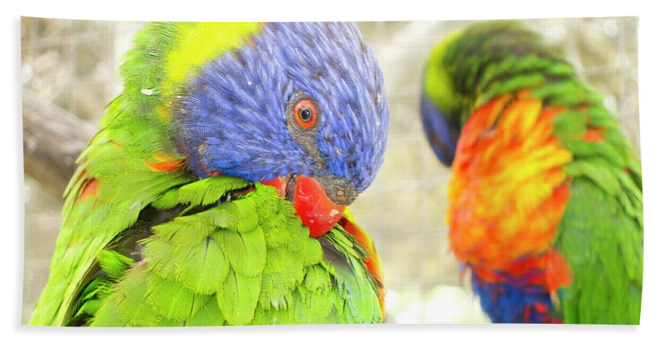 Rainbow Lorikeet Bath Sheet featuring the photograph Mirror Image by Douglas Barnard