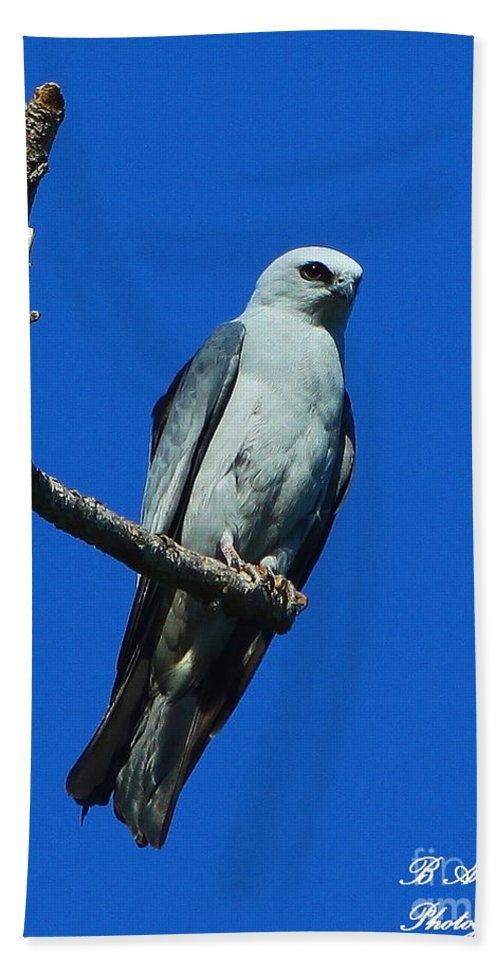 Mississippi Kite Hand Towel featuring the photograph Mississippi Kite by Barbara Bowen