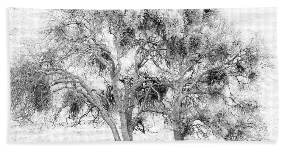 Trees Bath Towel featuring the photograph Mistletoe Tree In Black And White by Karen W Meyer