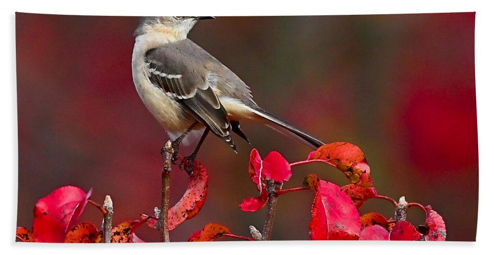 Mockingbird Hand Towel featuring the photograph Mockingbird On Red by William Jobes