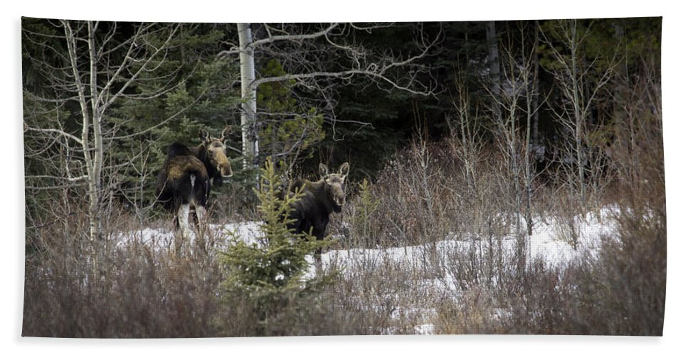 Bath Sheet featuring the photograph Mom And Calf In The Forest by J and j Imagery