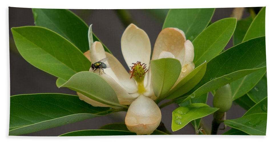 Hand Towel featuring the photograph Moments On The Magnolia by Amy S Klein