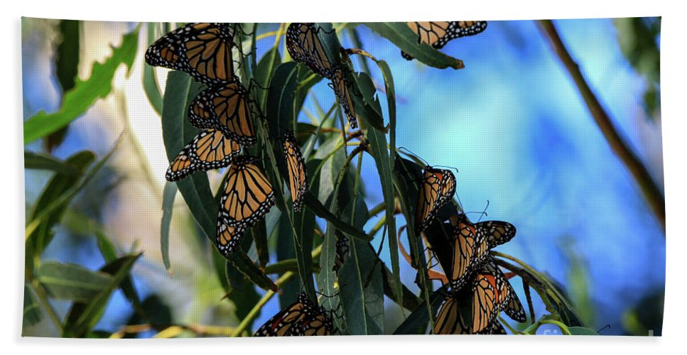Monarch Hand Towel featuring the photograph Monarch Blues by Craig Corwin