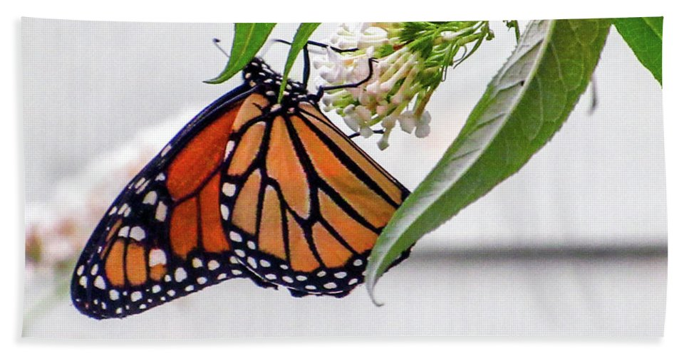 Butterfly Bath Sheet featuring the photograph Monarch Butterfly In The Garden 3 by CAC Graphics