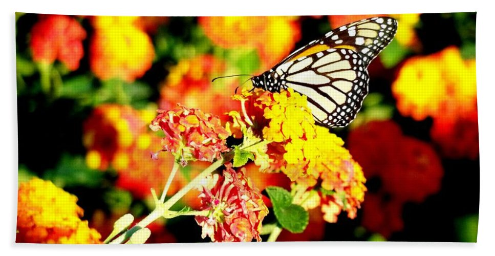 Monarch Butterfly Hand Towel featuring the photograph Monarch Butterfly by Adrienne Wilson