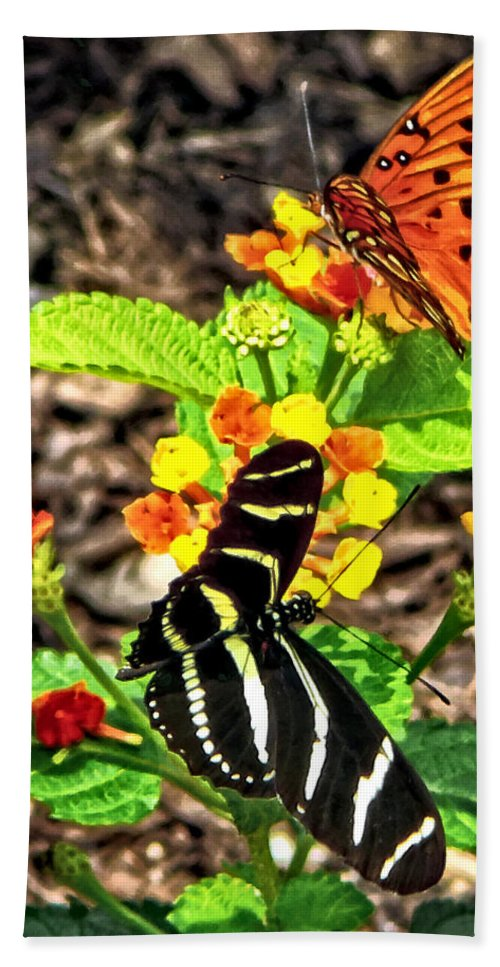 Butterfly Bath Sheet featuring the photograph Monarch Butterfly And Zebra Butterfly by Susan Savad