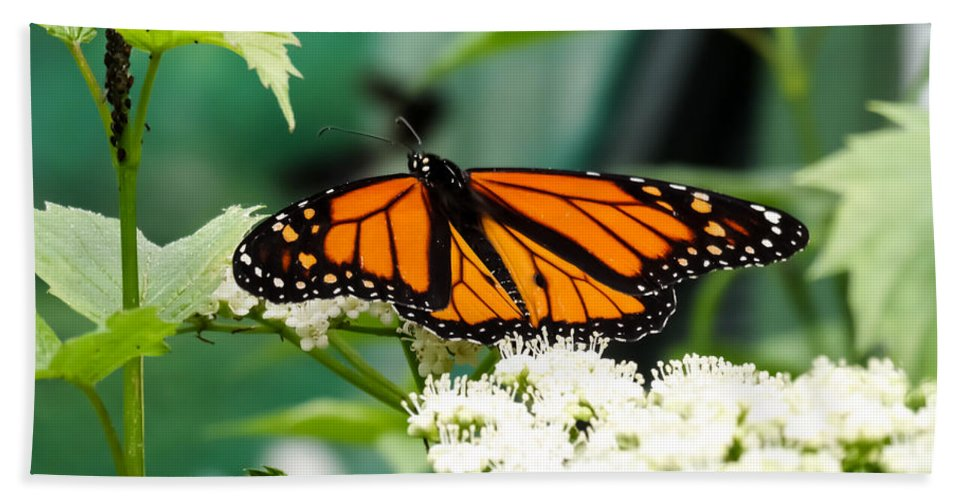 Monarch Butterfly Bath Sheet featuring the photograph Monarch Butterfly by Cynthia Woods