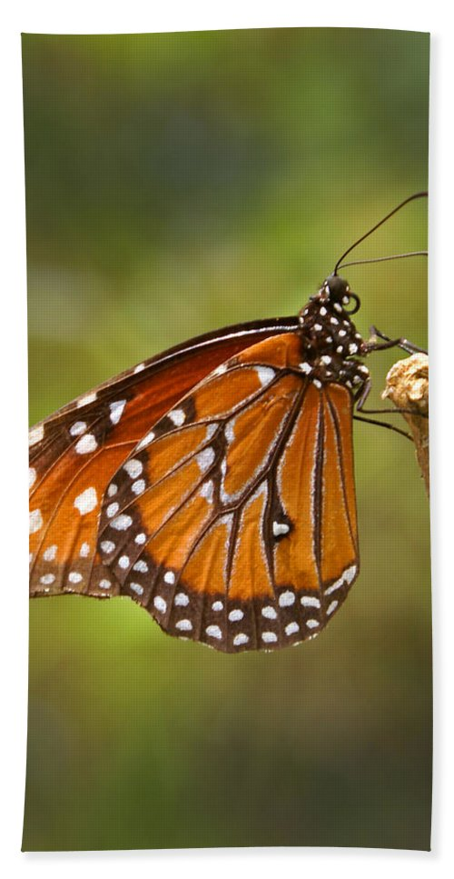 Monarch Hand Towel featuring the photograph Monarch Butterfly by Heather Coen