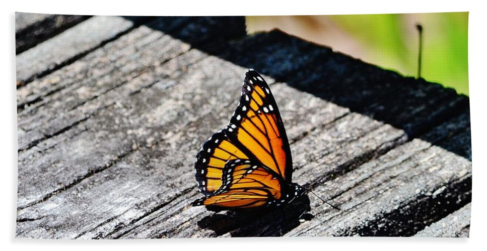 Insects Hand Towel featuring the photograph Monarch Butterfly I by Eileen Brymer