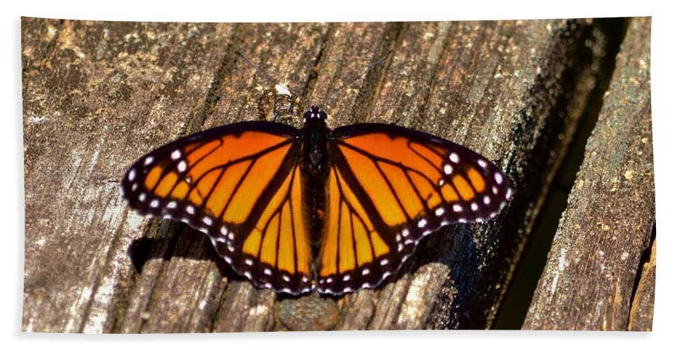 Monarch Hand Towel featuring the photograph Monarch Butterfly II by Eileen Brymer