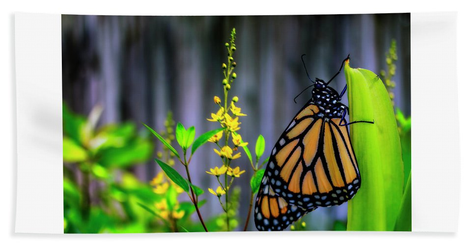 Butterfly Bath Sheet featuring the photograph Monarch Butterfly Poised On Green Stem Among Yellow Flowers by Sharon Minish