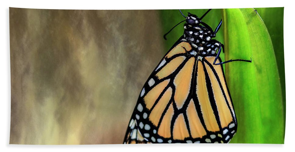 Butterfly Bath Sheet featuring the photograph Monarch Butterfly Poised On Green Stem by Sharon Minish