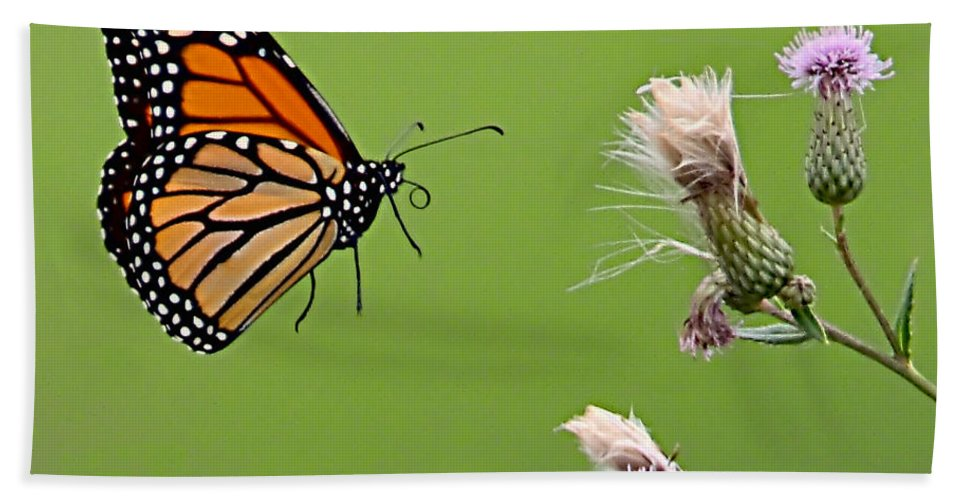 Butterfly Hand Towel featuring the photograph Monarch Butterfly by William Jobes