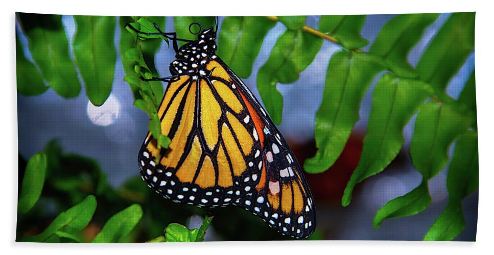 Hanging Bath Towel featuring the photograph Monarch Feeding by Garry Gay