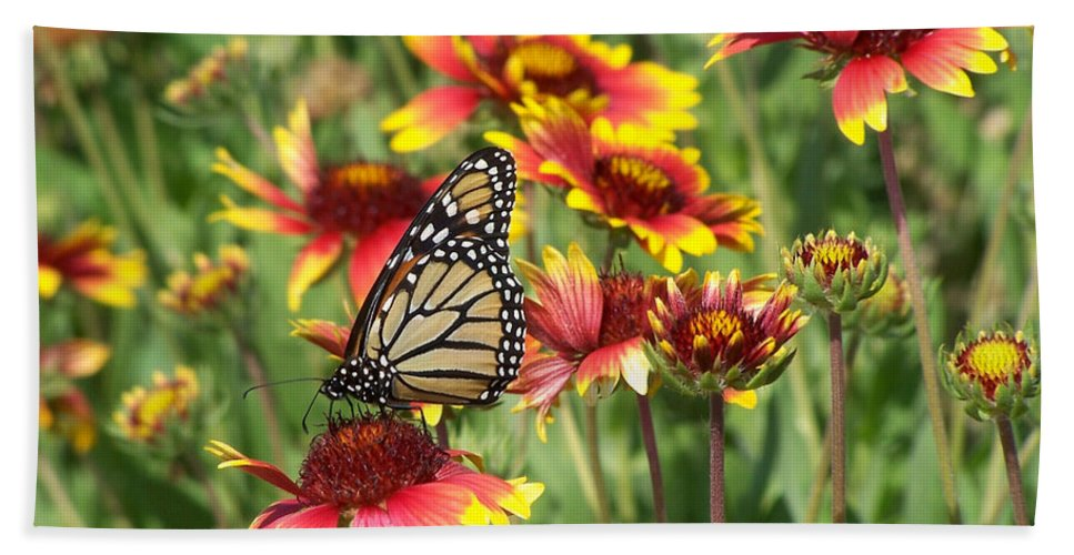 Nature Hand Towel featuring the photograph Monarch On Blanketflower by Peg Urban