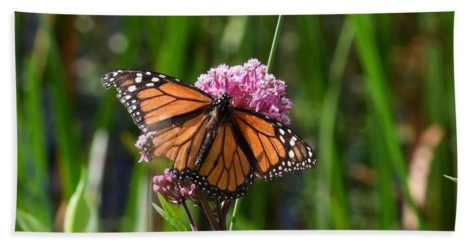 Butterflies Bath Towel featuring the photograph Monarch On Joe Pye by Hella Buchheim