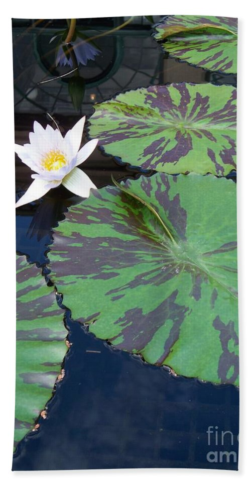 Photograph Hand Towel featuring the photograph Monet Lilies White by Eric Schiabor